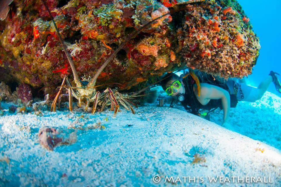 2015 Cozumel - Mathis Weatherall Lobster